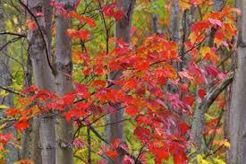 fall foliage algonquin provincial park photo u0026 travel idea canada