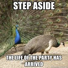 Peacock Meme - step aside the life of the party has arrived fabulous peacock