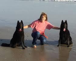 belgian sheepdog youtube contact us u2013 blackforest belgian sheepdogs groenendael