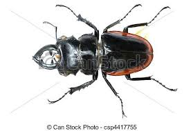was ist das für ein insekt eine wanze oder was urlaub insekten rehbock insekt wanze käfer freigestellt rehbock stockbilder