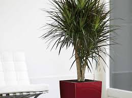 stunning indoor plants that dont need sunlight wearefound home