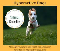 hyperactive dogs natural remedies for hyperactive dogs