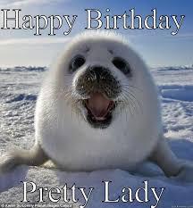 Penguin Birthday Meme - easily pleased seal memes quickmeme