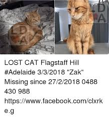 Missing Cat Meme - lost cat flagstaff hill adelaide 332018 zak missing since 2722018