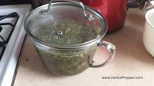where to buy horehound candy herbal cough syrup horehound herbal prepper