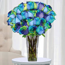 tie dye roses roses is home of the world s most colorful roses rainbow