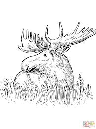 moose sitting in a grass coloring page free printable coloring pages