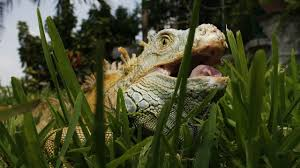 seven songs about lizards teamrock