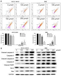 osthole induces apoptosis and suppresses proliferation via the
