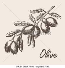 olive tree branch illustration in sketch style eps