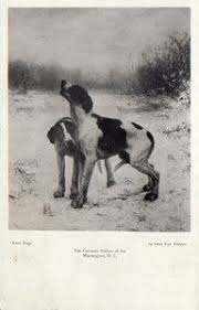 Dog Anatomy Book My Sudden Obsession With Vintage Dog Art Dog Anatomy After