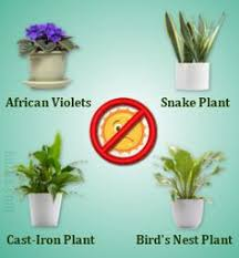 no sun plants dress up your home with these indoor plants that don t need sunlight