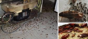 cafards cuisine acide borique cafard stunning loigner les with acide borique cafard