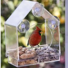 clear plastic window bird feeder birds i view window bird feeder nature anywhere