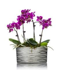 purple orchids modern magenta orchid planter at from you flowers