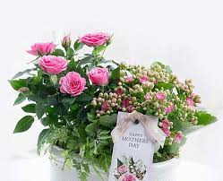 www flowers best 25 flowers ideas on pretty flowers beautiful