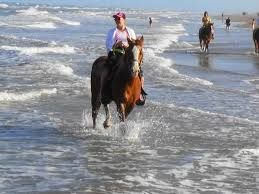Texas how far can a horse travel in a day images Horseback riding on the beach island adventure park jpg