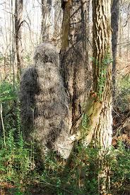 Tree Trunk Hunting Blind Cool Ground Blind Camo U0026 Ammo Pinterest Ground Blinds Deer