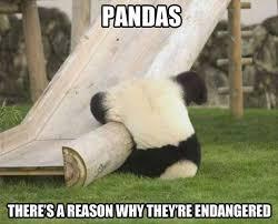 Panda Meme - panda meme weknowmemes