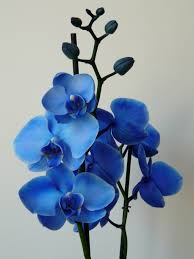 blue orchid flower blue orchid small cocktail centerpieces someday