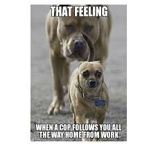 Puppy Memes - hilarious funny puppy memes joke quotesbae