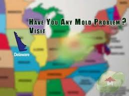 best 25 mold in bathroom ideas on pinterest clean shower mildew