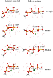 the effect of magnesium ions on triphosphate hydrolysis pure and