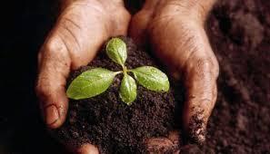 Gardening Tips For Summer - ultimate tips for summer gardening