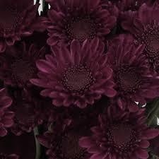 burgundy flowers novelty pom purple flower