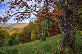 autumn leaf change in west virginia well underway west virginia
