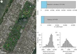 Central Park New York Map by Biogeographic Patterns In Below Ground Diversity In New York
