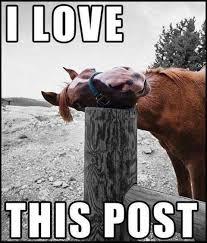 Most Funniest Memes Ever - 40 most popular funny love memes ever golfian com