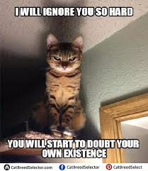 Evil Cat Meme - evil cat memes cat breed selector