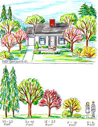 some ideas about planting trees by your house for curb appeal