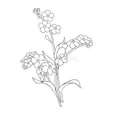 resuma el ramo de nomeolvides de las flores en el fondo blanco