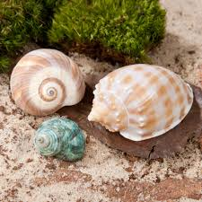 fluker u0027s hermit headquarters hermit crab growth shells