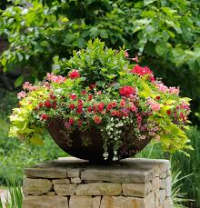 Outdoor Container Gardening Ideas Thrill Fill And Spill Three Easy Steps To Container Gardening