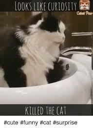Cute Funny Cat Memes - 25 best memes about cat surprised cat surprised memes