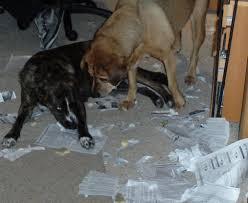 dogs shredding paper walking the dog