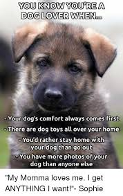 Comfortable Dog 25 Best Memes About Dog Toy Dog Toy Memes
