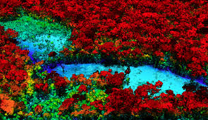 Under Canopy Rainforest by Breakthrough Technology Enables 3d Mapping Of Rainforests Tree By
