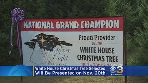 the white house christmas tree has been selected cbs philly