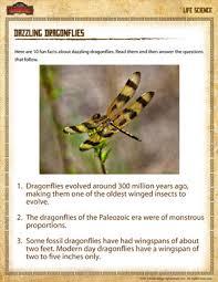 dazzling dragonflies u2013 free science worksheet for 4th grade