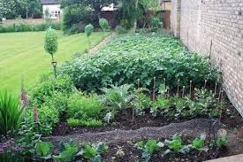 Vegetables Garden Ideas Backyard Vegetable Garden Ideas For Small Yards Bartarin Site