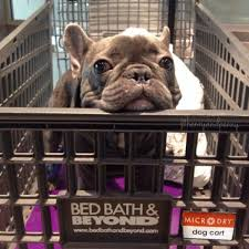 Beds Bath And Beyond Bed Bath Beyond Dyson Vacuum Home Beds Decoration