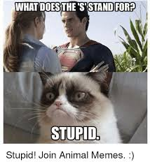 Stupid Animal Memes - 25 best memes about grumpy cat grumpy cat memes