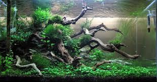 Aquascapes Com Beautiful Driftwood Aquascapes Pinterest Driftwood
