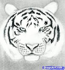 how to draw a tiger by drawing technique