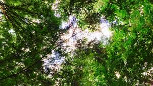 the forest app cuts your phone dependence with an app that plants