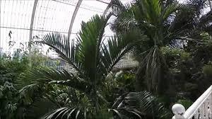 kew royal botanic gardens london inside the palm house upper
